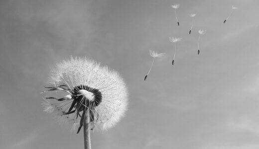 ドイツでの花粉症とマスクによる肌荒れ対策